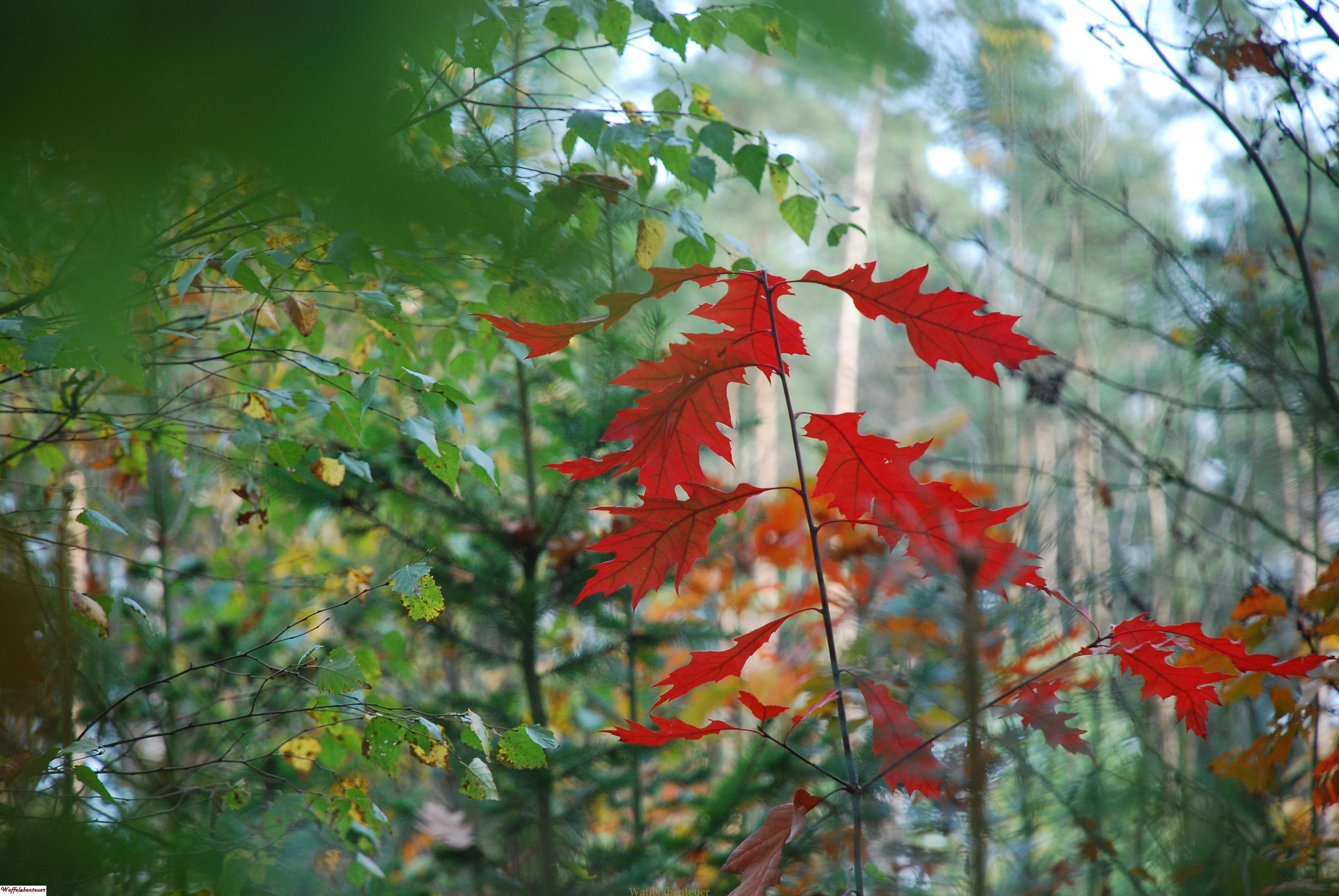 Blättermalerei